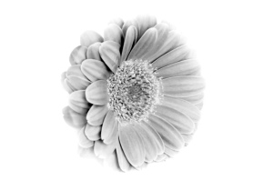flower_on_the_white_background