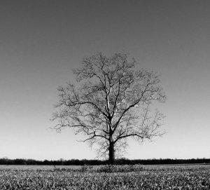 lone_tree_201550