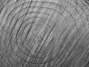 tree_rings_of_life